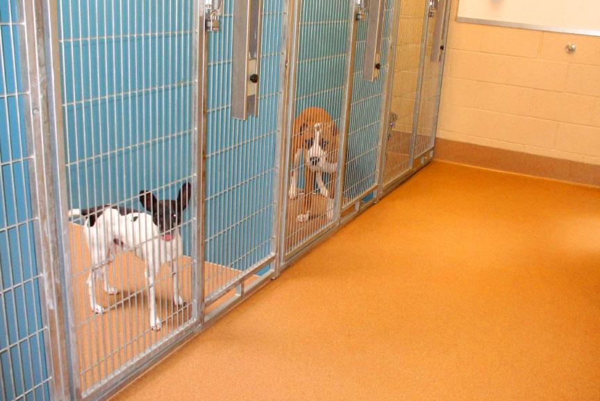 Albergue de mascotas